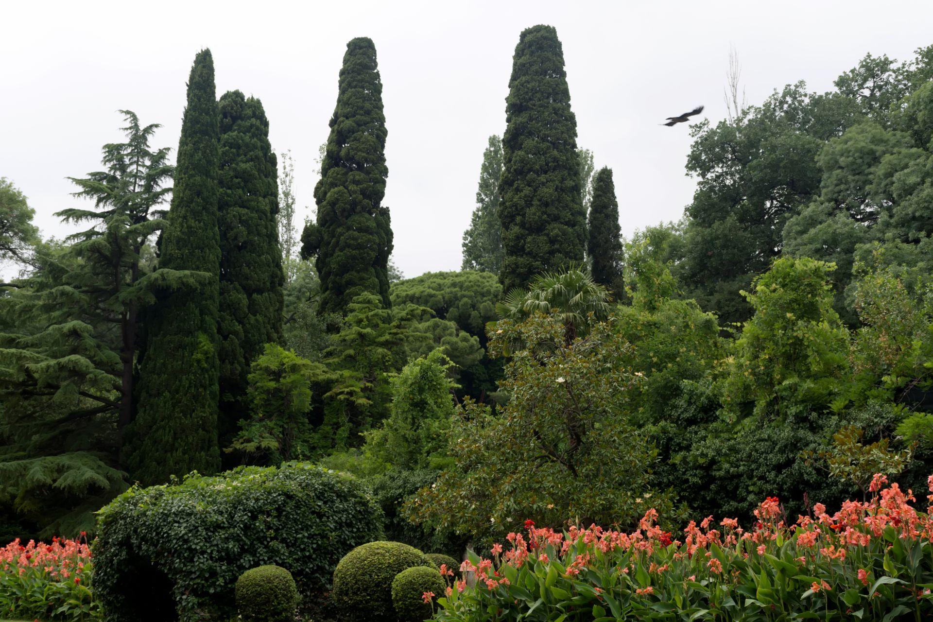 ходе розыска деревья мисхорского парка описание и фото нелюбителя пирсинга, плюсы